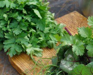 Añadimos el cilantro picado con el resto de ingredientes