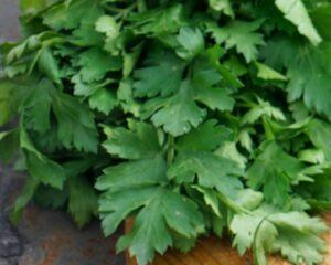 Espolvoreamos con cilantro