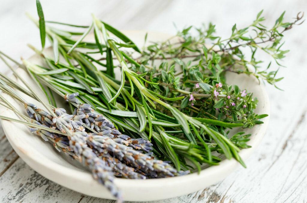 Cómo cuidar plantas aromáticas o especias en casa