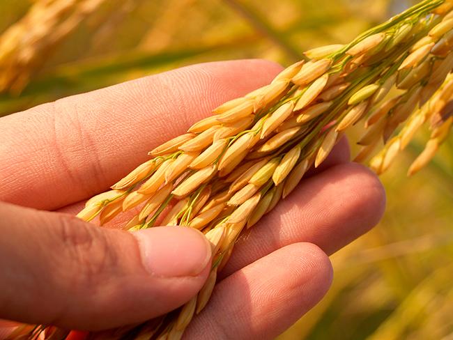 Cómo conservar el arroz